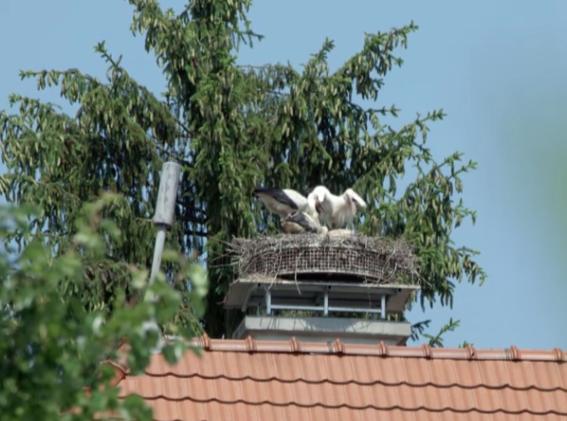 Nos voisins à plumes