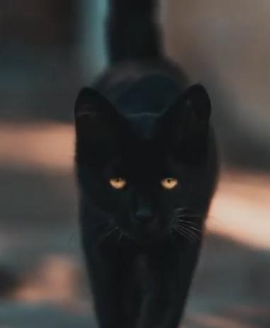 PROF de PSYCHO | 4 choses que vous ignorez sur les chats