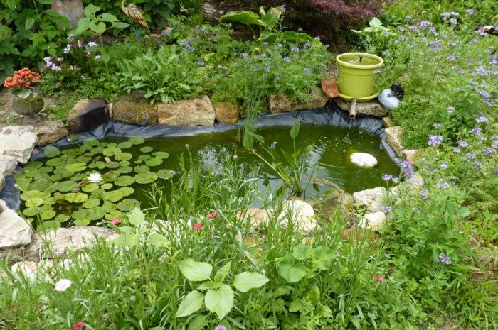 Mon bassin aquatique